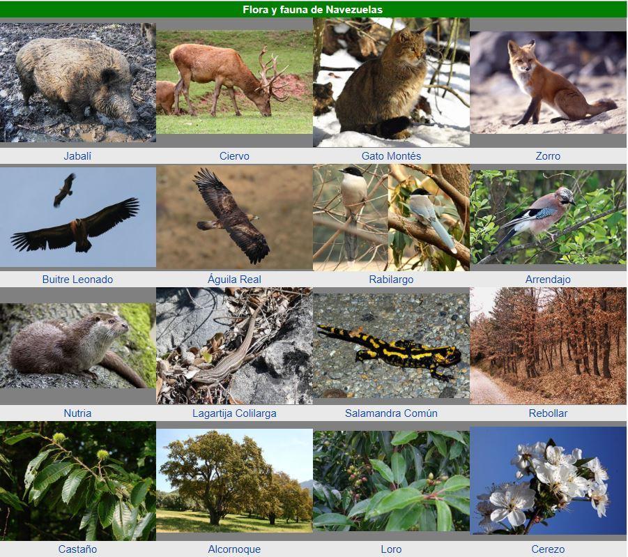 Flora y Fauna Navezuela